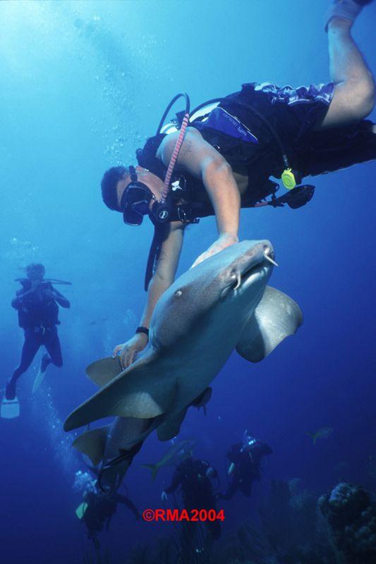 Discover scuba resort course padi ambergris divers - Ambergris dive resort ...