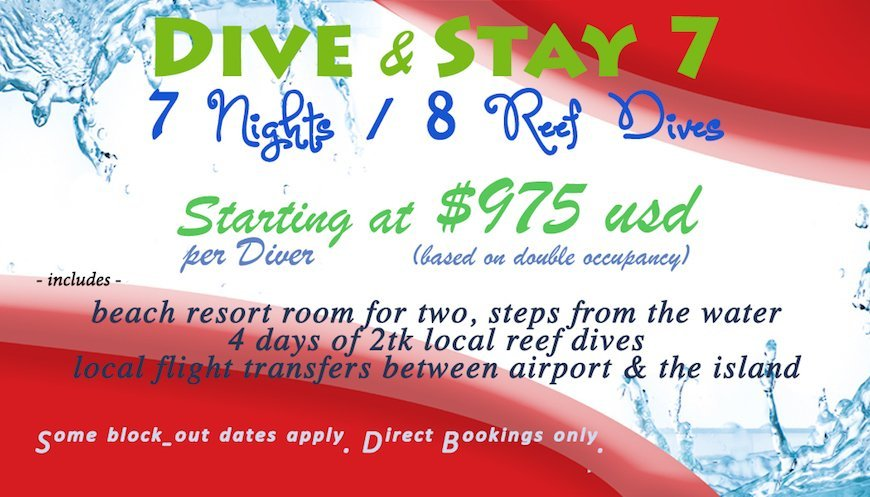 Dive Stay 7