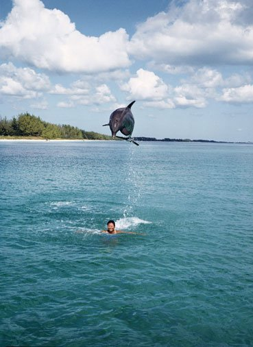 Caribbean Bottlenose Dolphin - Sea Life and Marine Animals in Belize
