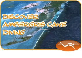 Discover Ambergris Caye Barrier Reef Diving