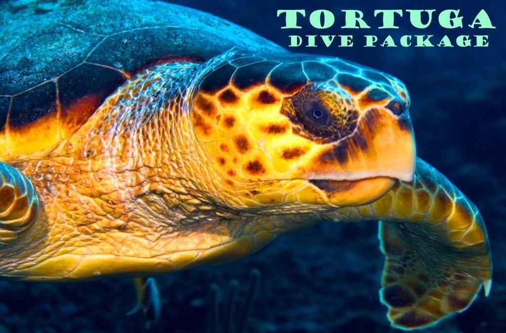 Tortuga Dive Pkg