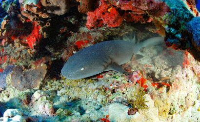Island-Secrets Dive N Snorkel Trip - Ambergris Divers