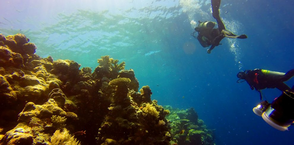Coral Reef Scuba Divers Turneffe Atoll - Ambergris Divers